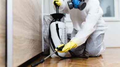 Photo of How to Keep Your Home Free from Pests