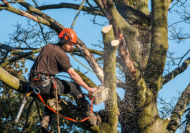 Photo of Why Call a Tree Surgeon to Work on Your Property